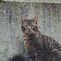 schönes streunendes Katzenporträt