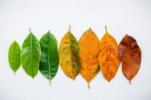 mehrfarbiges Herbstlaub foto