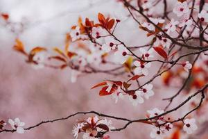 rosa Blütenpflanze in der Natur in der Frühlingssaison foto