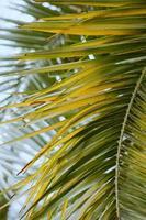 grüne Palmenblätter foto