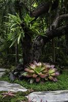 grüne Pflanzen im tropischen Garten