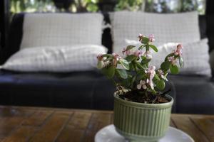 Außenterrasse mit Topfpflanze foto