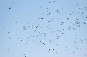 Silhouetten von Möwen, die in einem blauen Himmel fliegen foto