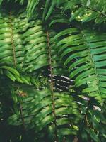 Blätter im tropischen Waldpark