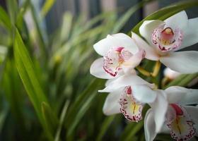 weiße und gelbe Blüten in Tilt-Shift-Linse foto