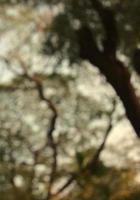 verschwommener Garten, Wald oder Baumnatur abstrakter Texturhintergrund