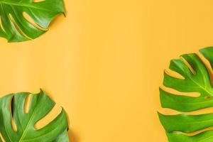 Monstera Blätter auf orange Hintergrund