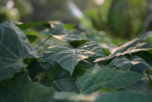 grüne frische Botanik mit verschwommenem Bokeh-Hintergrund foto
