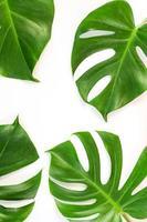 Monstera Blätter auf weißem Hintergrund foto
