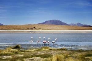 Laguna Colorado in Bolivien