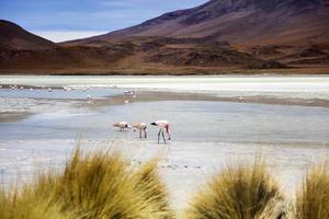 Laguna Hedionda in Bolivien foto