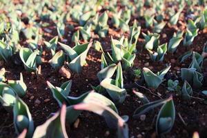 Pflanzensprossen und Jungpflanzen mit Makrodetails