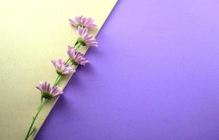 lila Blumen flach lagen auf grauem und lila Hintergrund foto