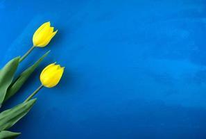 gelbe Tulpenblumen flach lagen auf handgemachtem hellblauem Ozeangrunge abstrakt