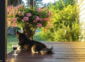 schwarzer Hund, der auf Veranda neben Glas Wein und Blumentopf mit Büschen im Hintergrund legt foto