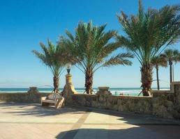 Parkbank neben Felswand unter drei Palmen und klarem blauem Himmel foto