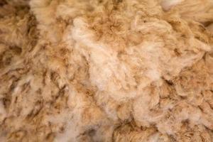 Nahaufnahme von Alpaka-Wolle