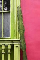 Kaktus an der Wand foto
