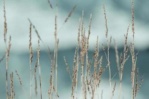eine Nahaufnahme einiger Pflanzen vor dem Ozean foto