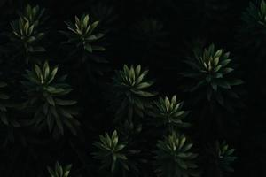 eine Nahaufnahme einer super strukturierten repetitiven dunkelgrünen Pflanze foto