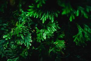 unscharfe Nahaufnahme grüner Blatthintergrund foto