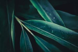 Nahaufnahme des grünen Blatthintergrundes foto