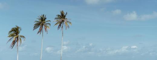 minimale tropische Kokospalmen im Sommer mit Himmelhintergrund