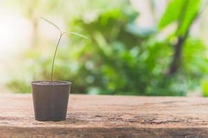 Topfpflanze auf dem Tisch foto