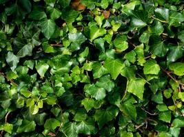 grüne Pflanze in einem Garten foto