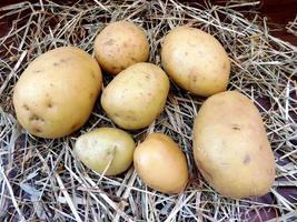 Kartoffeln auf einem Stroh- oder Heuhintergrund foto