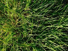 Grasfläche im Sonnenlicht foto