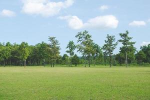 Park mit grünen Grasfeldern mit einem schönen Parkszenenhintergrund foto
