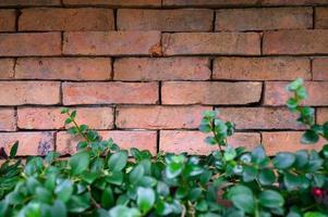 rote Backsteinmauer mit Pflanzen