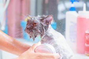 wütende Katze in der Badewanne foto
