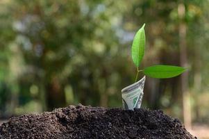 das Wachstum des Geschäfts durch einen wachsenden Baum dargestellt foto