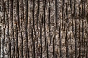 Rindenbeschaffenheit auf großem Baum foto