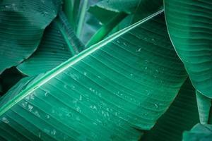 Nahaufnahme des Bananenblattes mit Wassertropfen