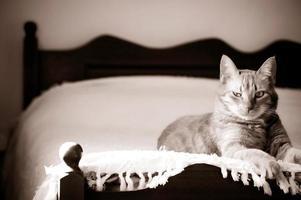 verdächtig aussehende Haustierkatze foto
