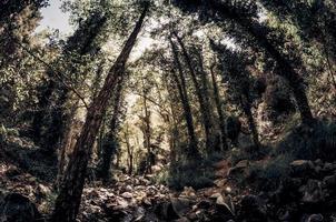 Bach in einem Wald foto
