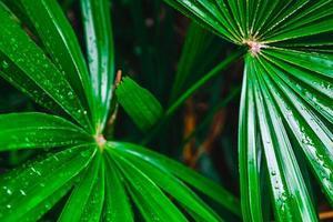 Nahaufnahme von grünen Palmblättern