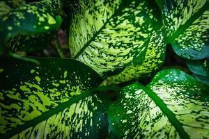 Detail der grünen Blätter