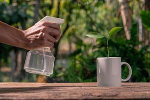 das Wassersprühgerät von Pflanzen in Töpfen foto