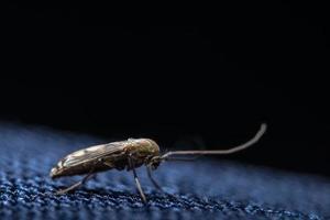 Eintagsfliegen Insekten Natur