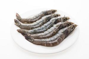 rohe frische Garnelen auf einem weißen Teller