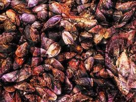Haufen Muscheln in Muscheln foto