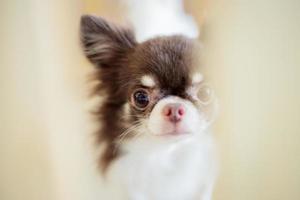 Hund im Käfig aus Holz foto