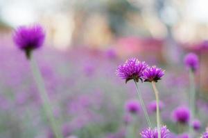 Blume auf verschwommener natürlicher Umgebung foto