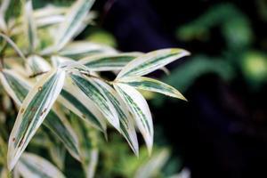 Blätter auf einer Pflanze mit Sonnenaufgang foto