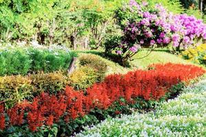 Blumen auf einer Plantage.