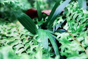Blätter auf einer Pflanze und Farn mit Sonnenaufgang foto